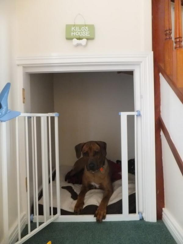 Diy Casinhas Para Cachorros Em Sua Casa