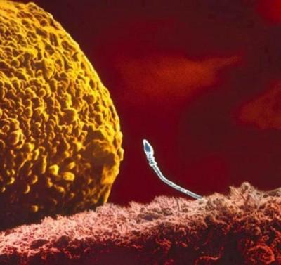 esperma no utero