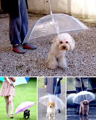 chapeu chuva para animais