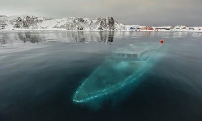 iate antártida