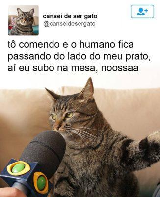 cansei_de_ser_gato2