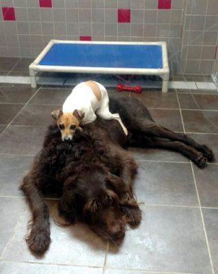 animais-resgatados1