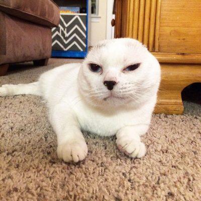 gato-surdo2